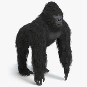 gorilla pbr 3D model