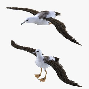 bird albatross 3D model