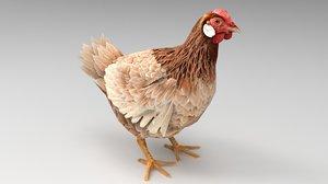 hen chicken fowl 3D