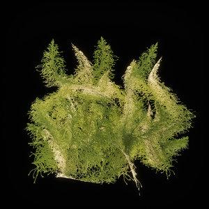 3D model moss 7