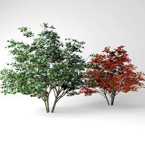 3D kousa dogwood model