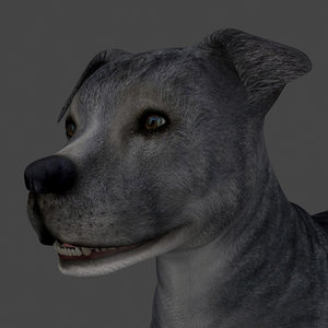 3D dog rigged model