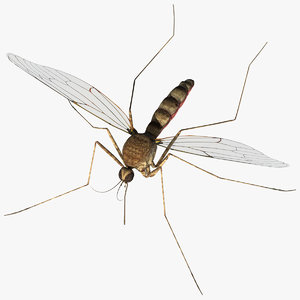 mosquito 3d model