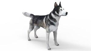 husky dog animal 3D