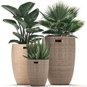3D decorative plants potted model