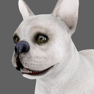 rigged dog walks place 3D
