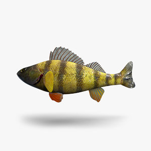 3D perch fish
