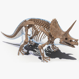 3D triceratops skeleton fossil transparent model