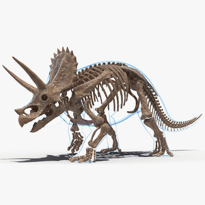 3D model triceratops skeleton fossil transparent