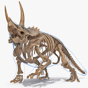 3D triceratops skeleton fossil transparent