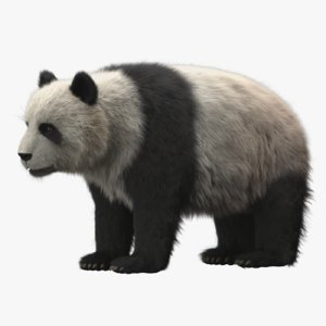 panda fur modeled 3D model