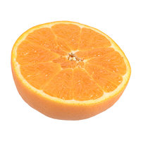 Highly Detailed Orange Half Scan