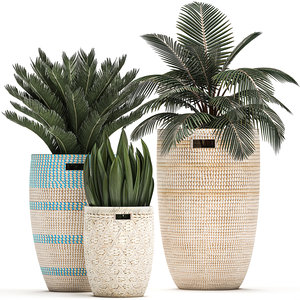 3D potted interior flowers plants