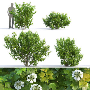 3D model flowering viburnum bushes 2
