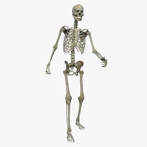 3D skeletal rigged