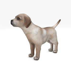cute puppy white animate 3D