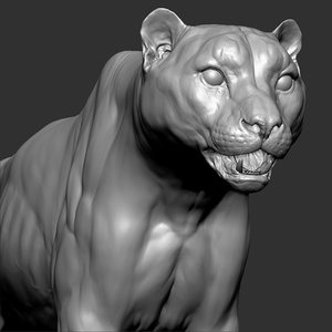 snow leopard panthera uncia 3D model