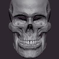 Human Female Skull 3D