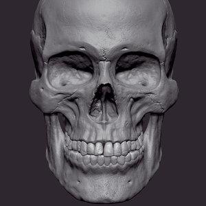 human skull female cranium 3D