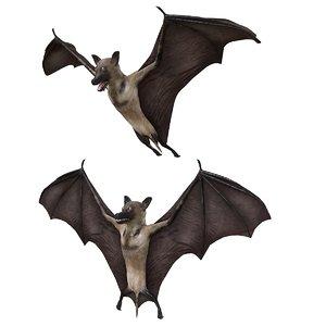 bat bird 3D