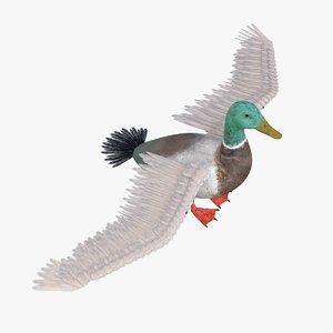 3D model bird duck