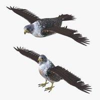 Falcon Bird Rigged