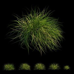 grass 03 3D