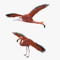 Flamingo Bird Rigged