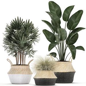 decorative plants interior potted 3D model