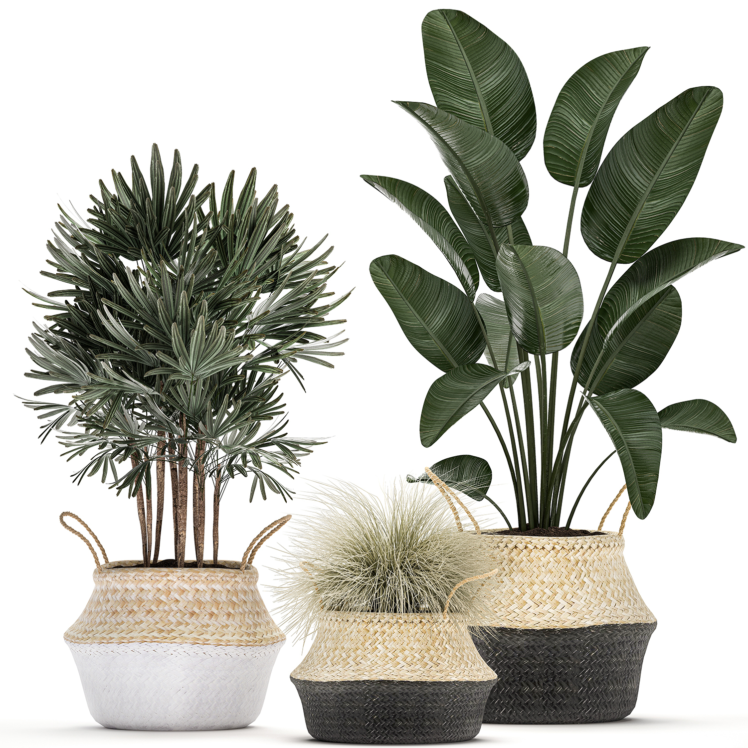 Decorative Plants Interior Potted 3d Model Turbosquid 1536610