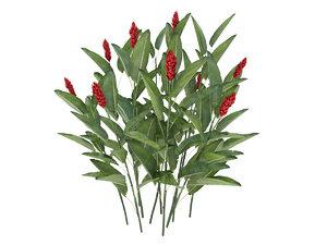 plant alpinia purpurata 3D model