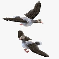 Goose Bird Rigged