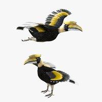 Hornbill Bird Rigged