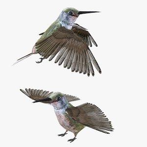 bird humming 3D
