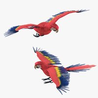 Macaw Parrot Bird Rigged