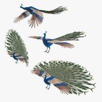 Peacock Peafowl Bird Rigged