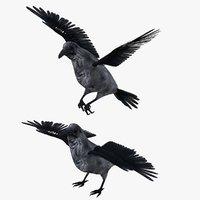 Raven Crow Bird Rigged