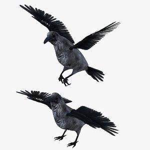3D model raven bird