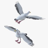 Seagull Bird Rigged