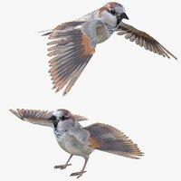 Sparrow Bird Rigged