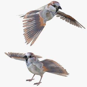 bird sparrow 3D model