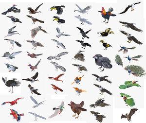 birds pigeon raven 3D model