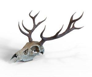 skull horns deer 3D model