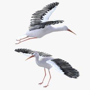 3D bird stork model