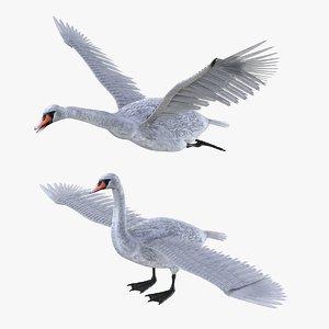 3D bird swan