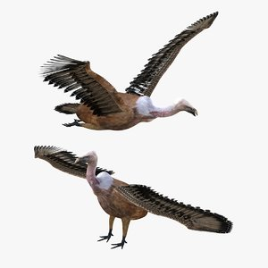 3D bird vulture model