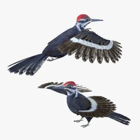 Woodpecker Bird Rigged