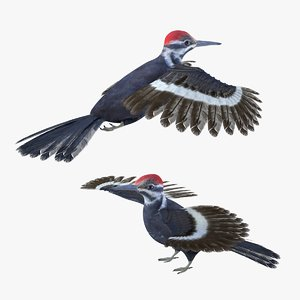3D model bird woodpecker
