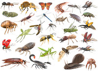 30 Insects Rigged Collection