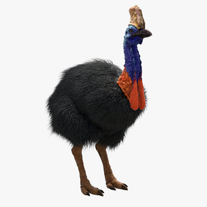 cassowary ornatrix hair 3D model